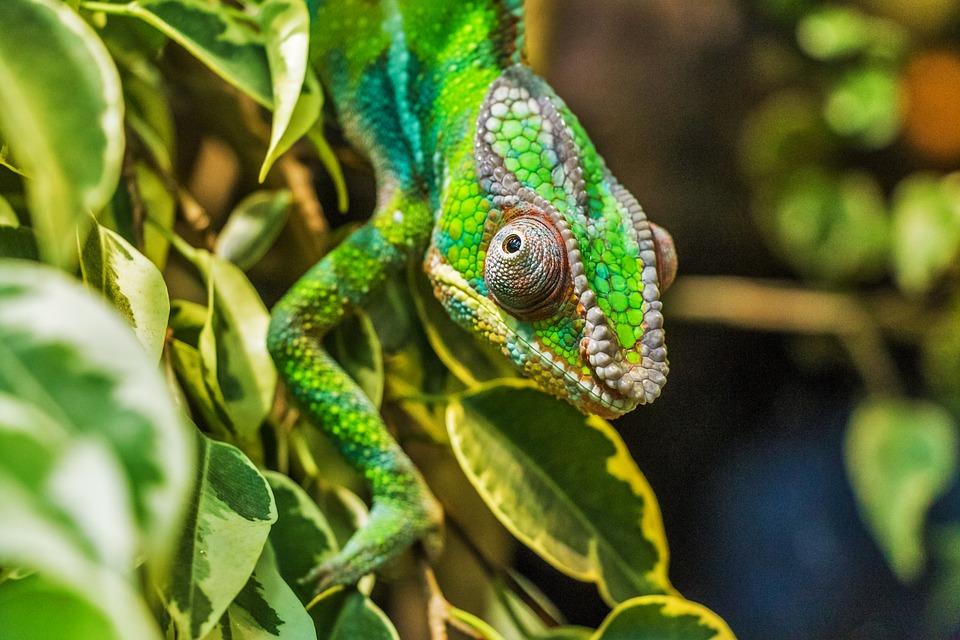 Séjour à Madagascar: que faire dans le nord?